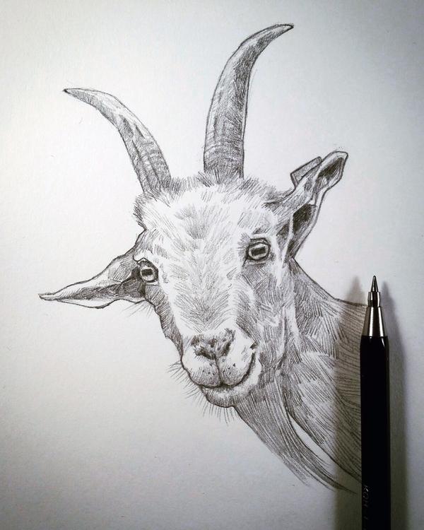 / Rose, happy goat saturday ske - mrbraintree | ello