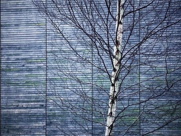 Silver Birch - vsco - davidhawkinsweeks | ello