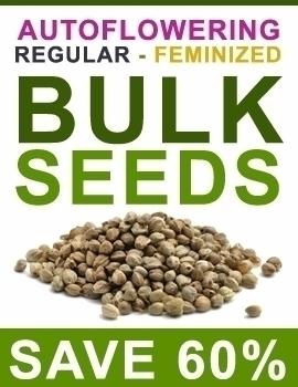 pm - buymarijuanaseeds | ello