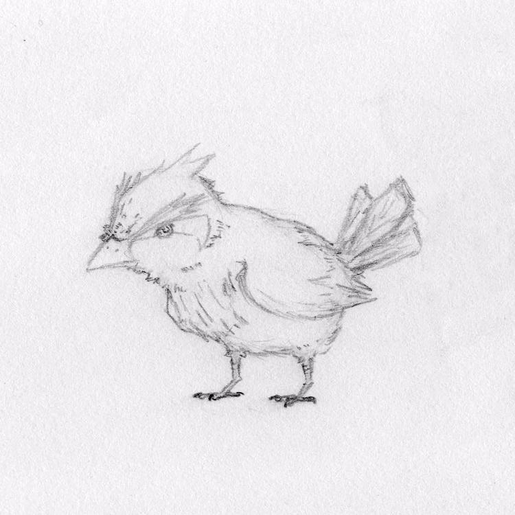 //Fanart   Sketch Pidgey Pidgeo - stadyone   ello