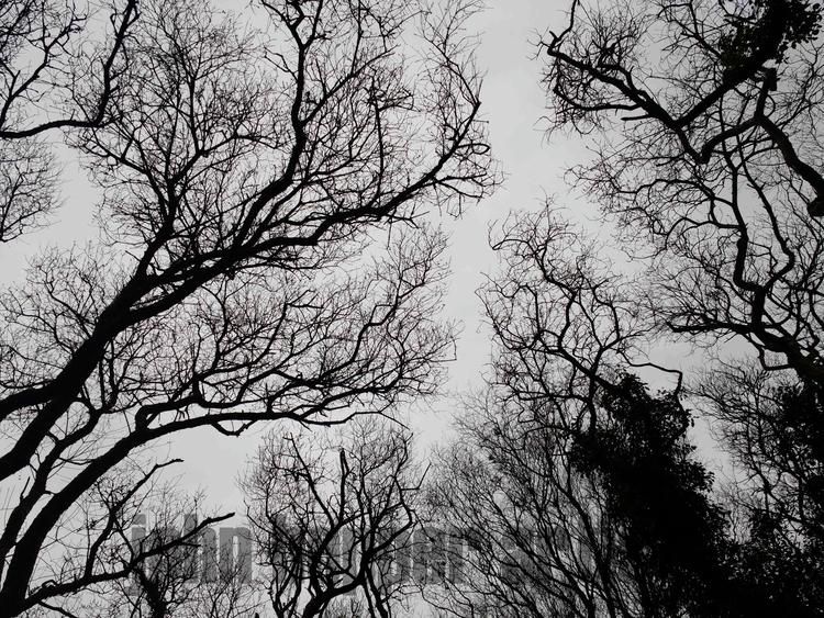 ***BREEZE TREES*** tops trees s - johnhopper | ello