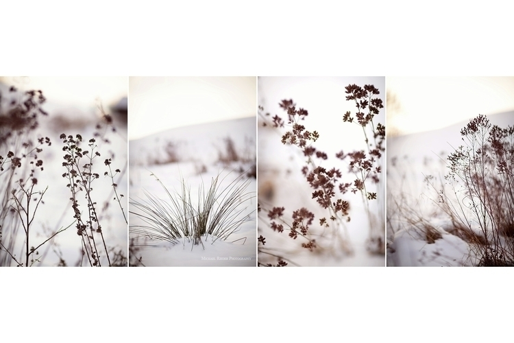 winter, scenery, collage, winterimpressions - michael-rieder-photography | ello