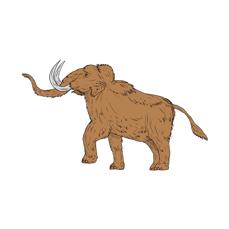 Woolly, Mammoth, Prancing, Drawing - patrimonio   ello