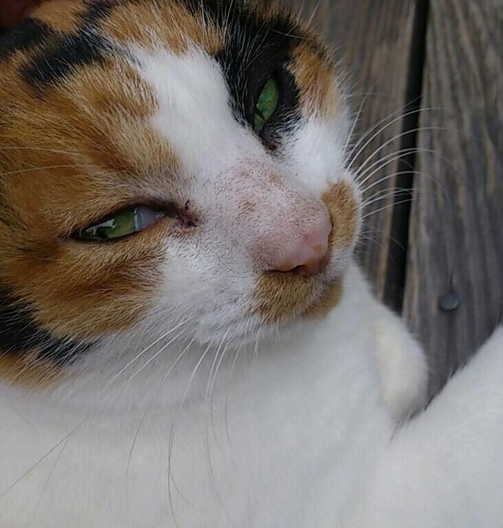 beautiful, cute, cat - mamimumemami   ello