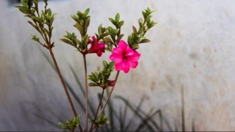 flower, nature, outdoors, colors - saywhahnah | ello
