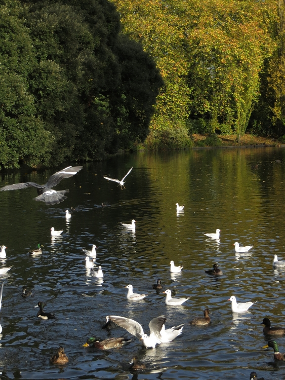 Ducks, Ordekler, Order, Siparis - willmoller | ello