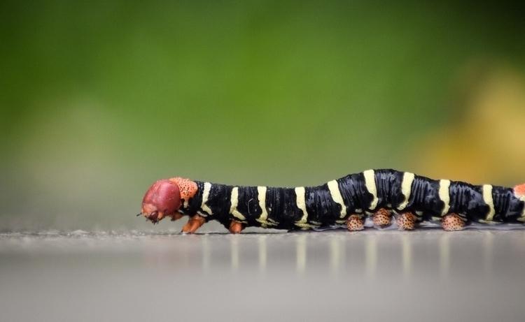 caterpillar Jameel Mohamed - Guyanese - guyfrog16 | ello