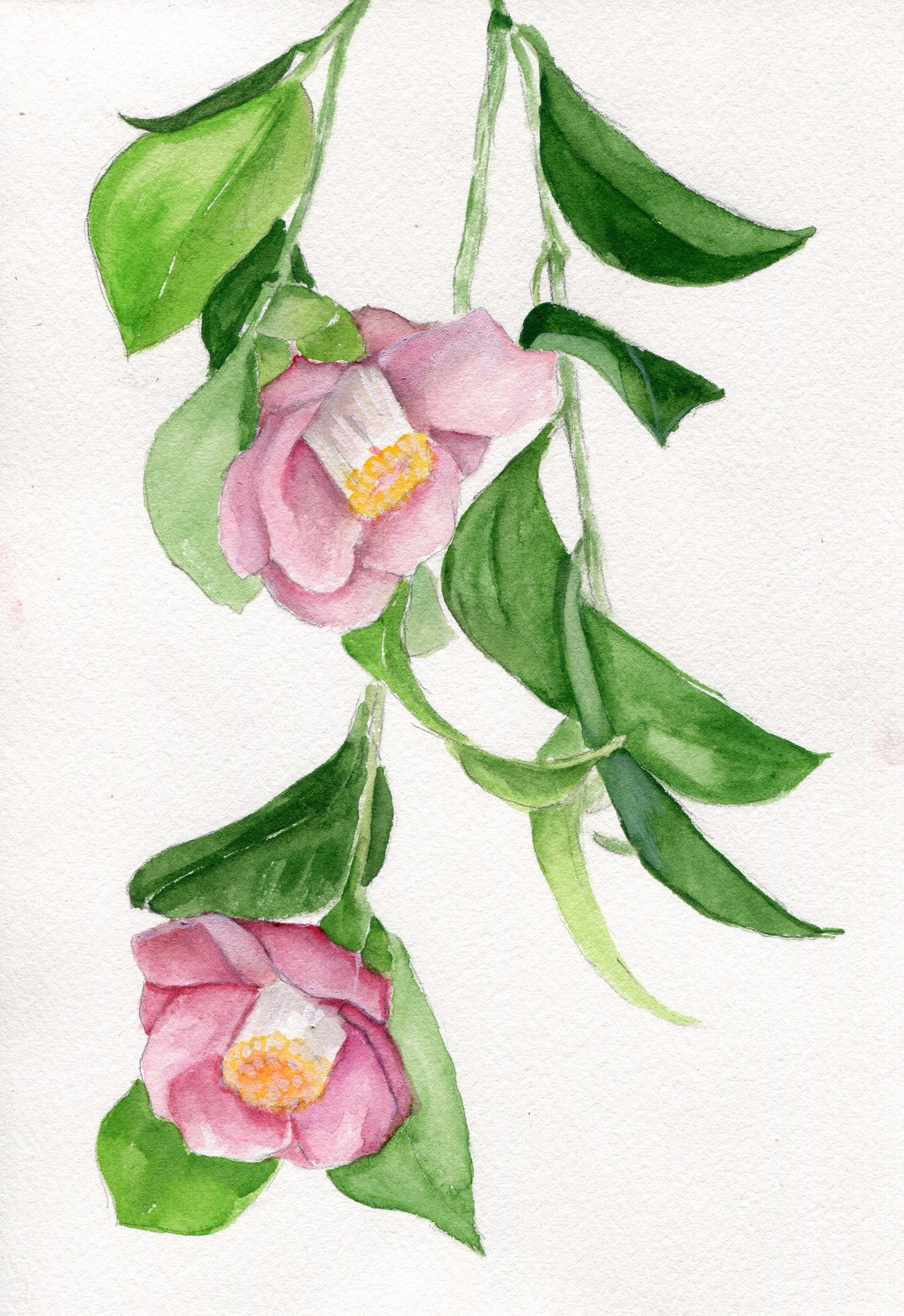 Hanging Watercolor Gouache Cott - havekat | ello