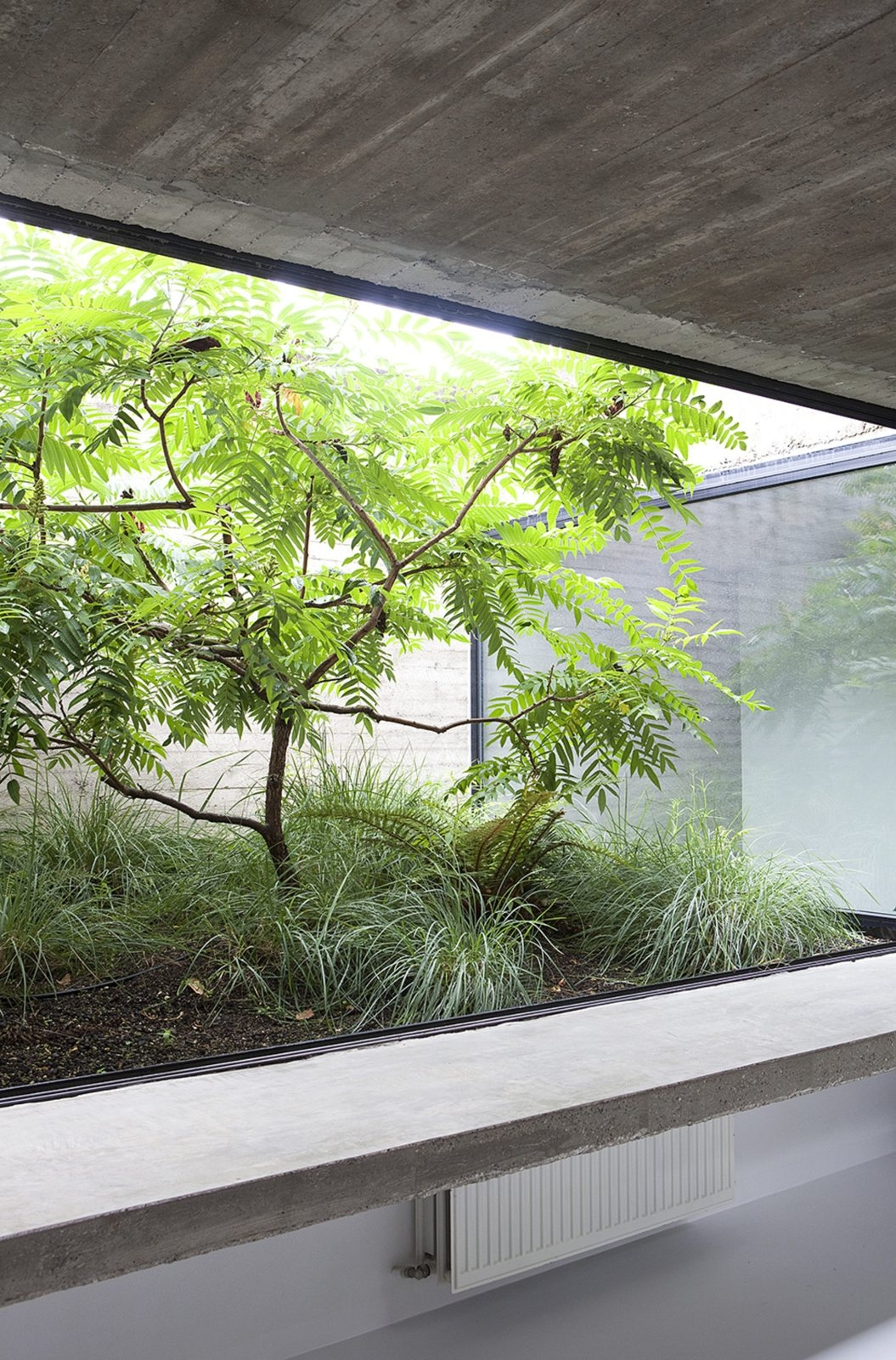 Glass-enclosed garden. House EL - upinteriors | ello