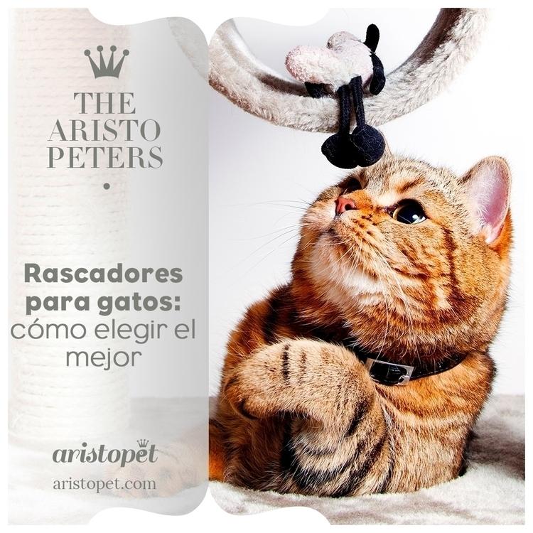 Para los gatos, afilarse las uñ - aristopet | ello