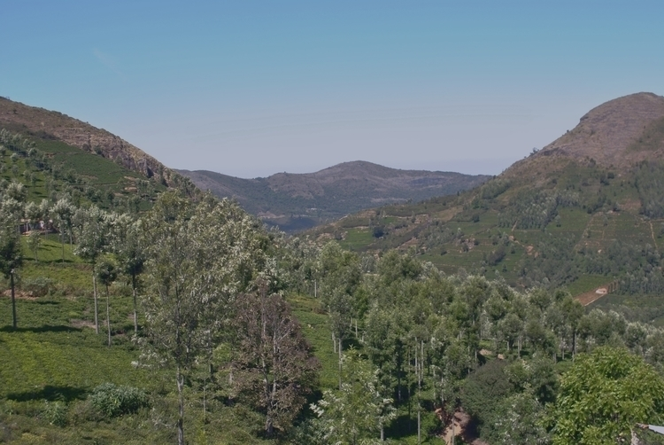View top ! Tea valley, Nilgiris - cshivkumar   ello