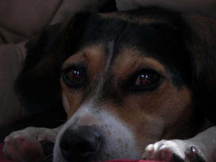 dog presentness embodies pain,  - tenderbastard | ello