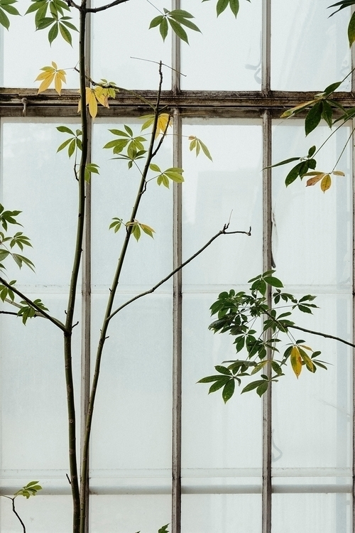 sunny sunday - greenhouse, plants - maltejrichter | ello