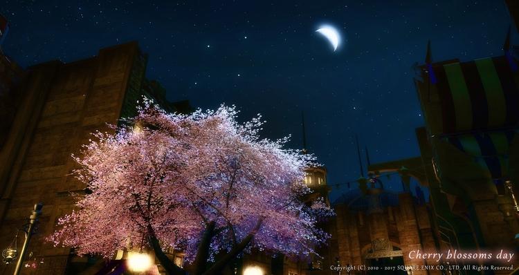 cherry blossoms day 3月27日はさくらの日 - flcvs | ello