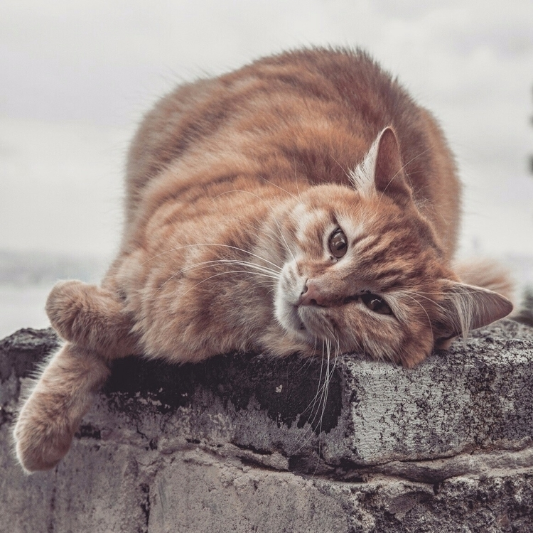 cat, animal, cute - emreberkay | ello