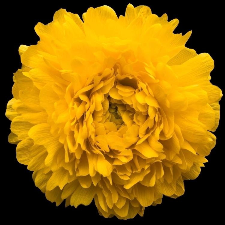 Plant Studay unknown yellow flo - chrishuddleston | ello