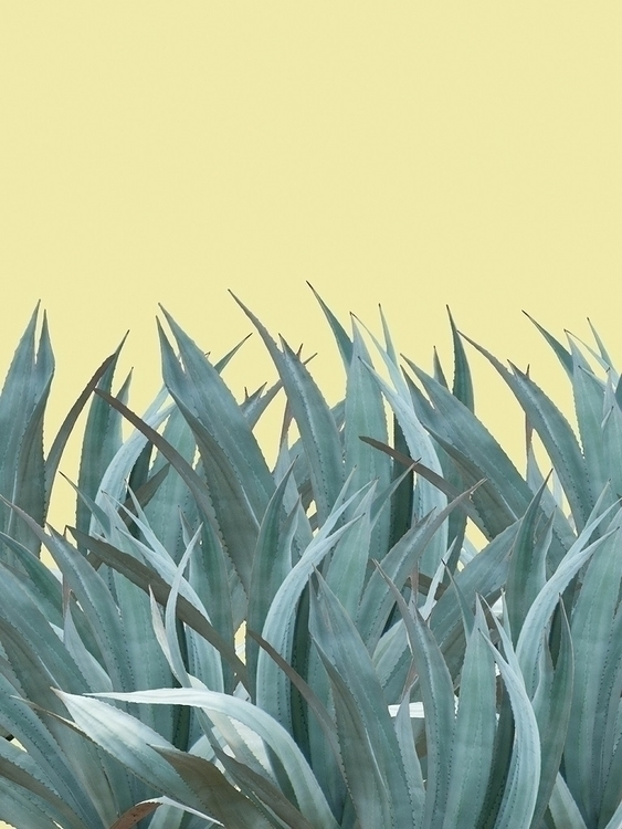 Agaves - nature, color, abstract - eugenie_s | ello