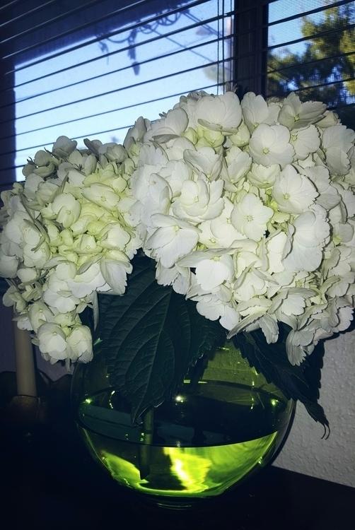 flowers, hydrangeas, green, vase - lukableu | ello