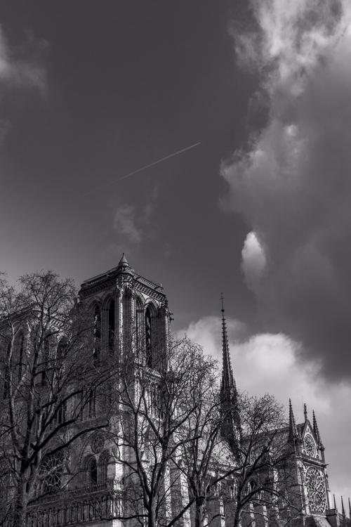 trees life town. Notre Dame, Pa - ottonome | ello