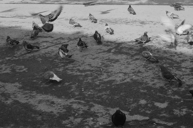 birds - Zenit, Astrum, Moscow - constantinpudan | ello