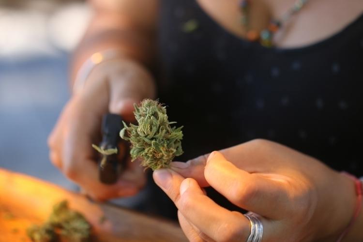 Emerald cannabis girl gang. spo - thekindland | ello