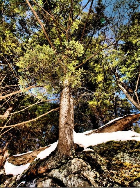Nature finds - wilderness, forest - natureisfree   ello