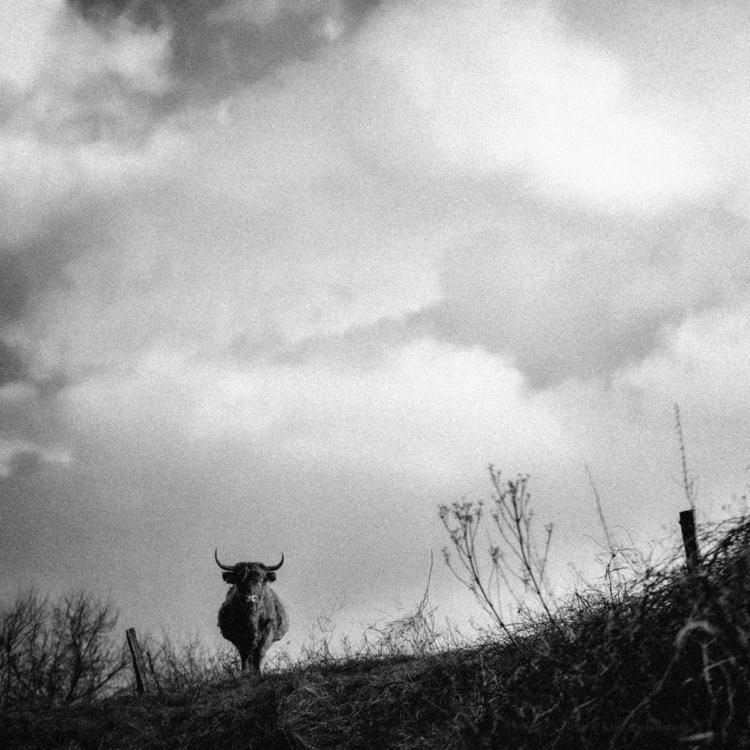 Standoff, 2017 - animals, blackandwhite - klaasphoto | ello