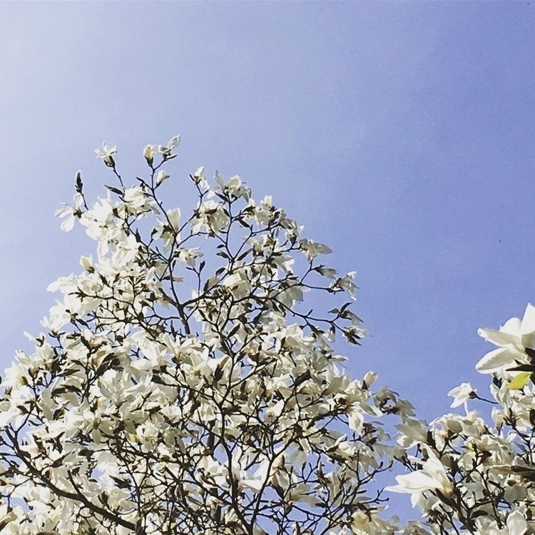 Spring, lovely today - photo, image - goldenbirdiewrites   ello
