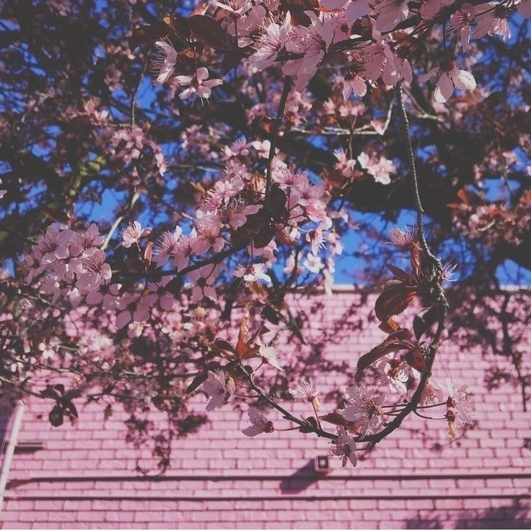 Pink Spring - jtc | ello