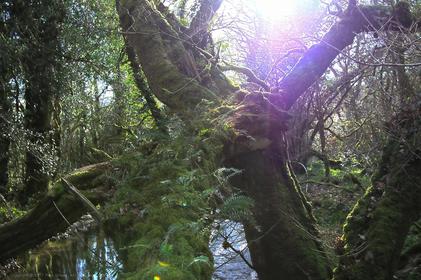 Title: 'Woodland sunshine - hdr - paulgillard | ello