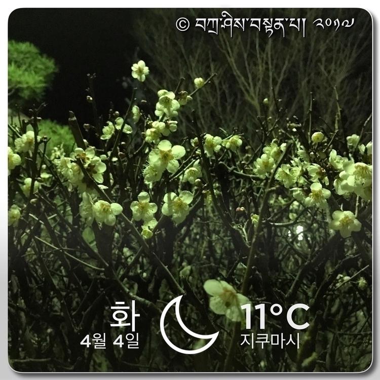 بوڠا ڤلـــــم :cherry_blossom - PlumBlossom - kien1tc | ello