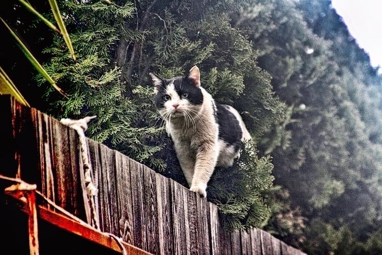 exploring frontiers - outdoor, cat - cornelgin | ello