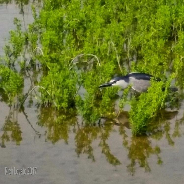 Aussie egret - sun, beach, fun, smile - richlovato   ello