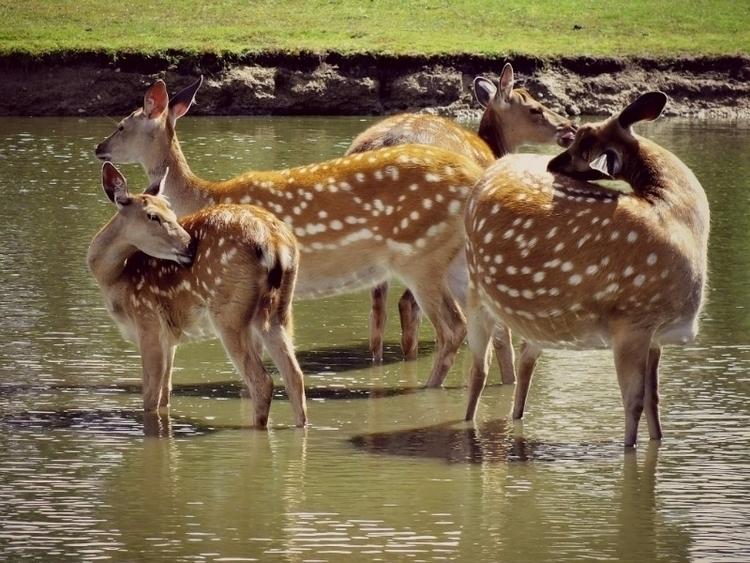 Family time - nature, animals, summer - moonred | ello