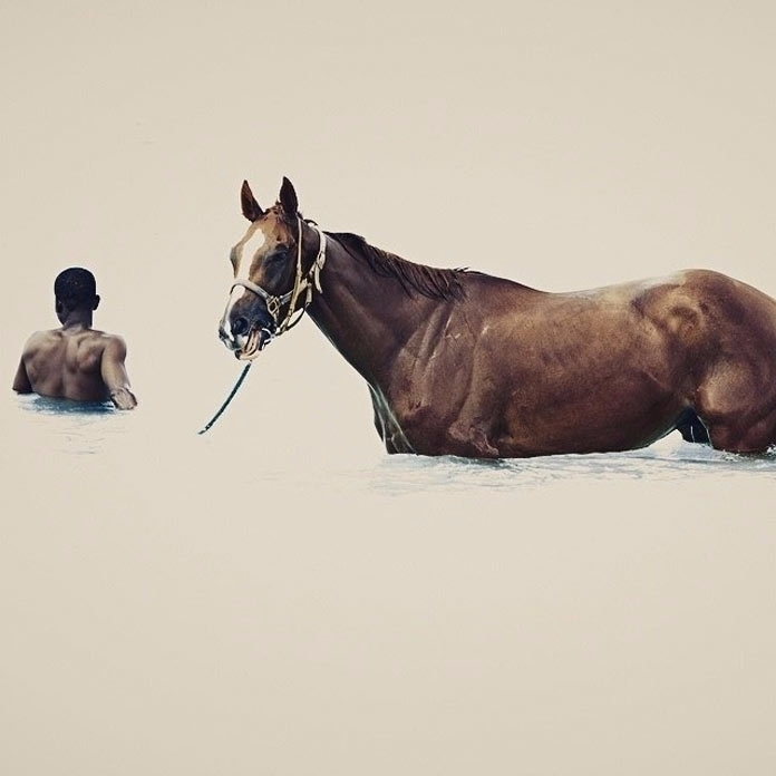 Photograph horse water Barbados - decorkiki | ello