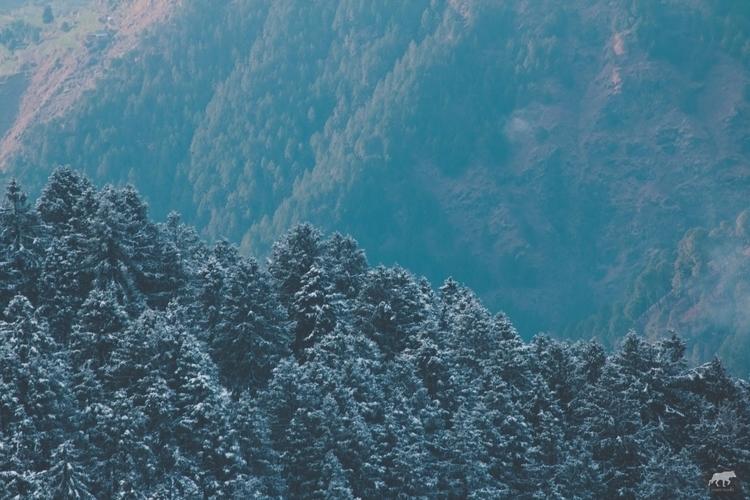 fascinated green trees. time wh - aryamanpathania | ello
