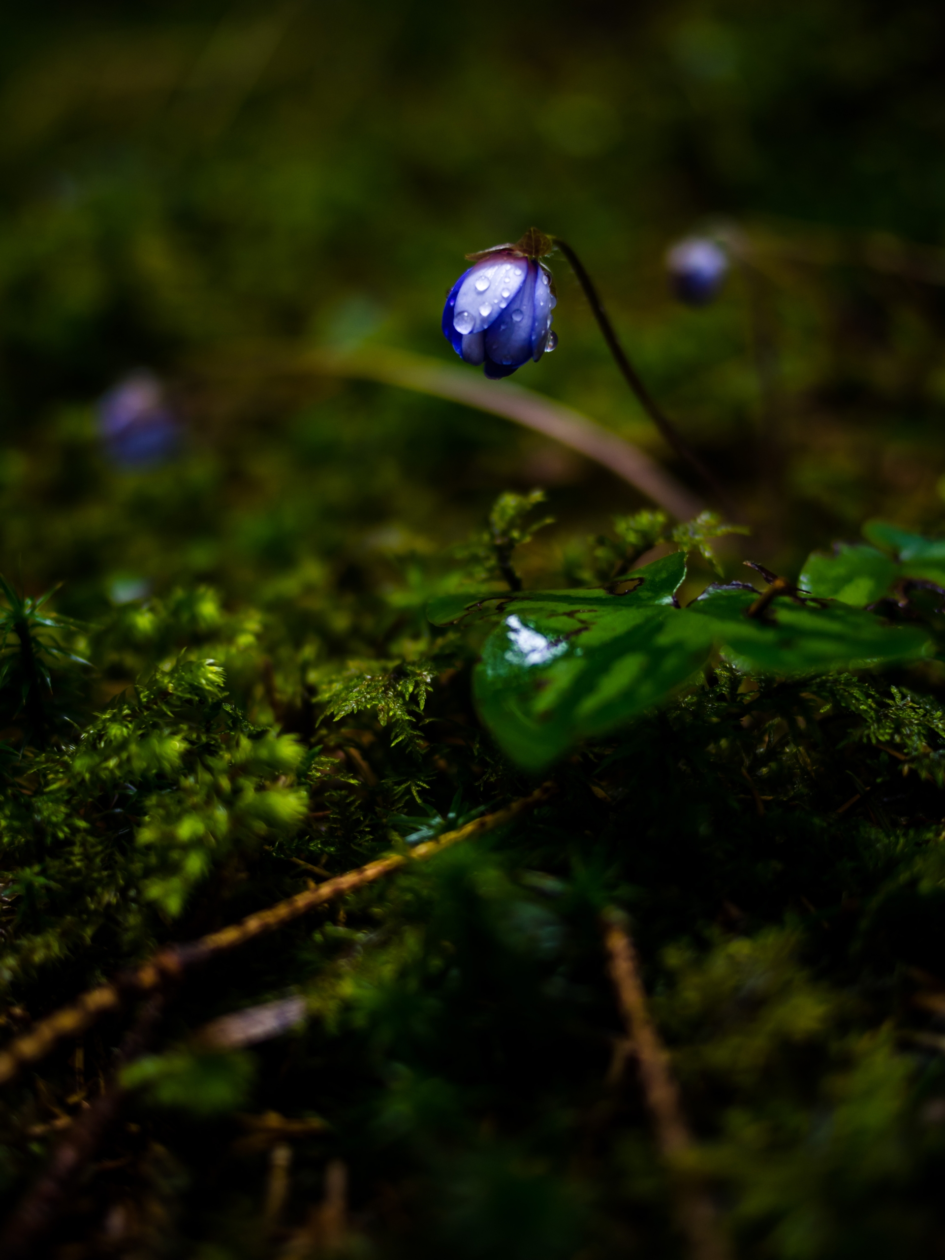 Spring - Switzerland - jfobranco | ello