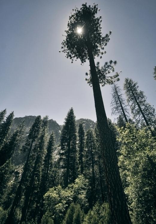 tall - trees, yosemite - snowyroads | ello