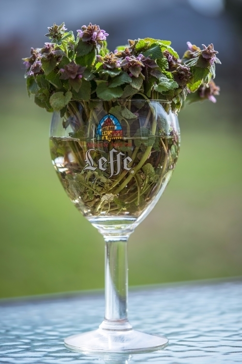 *Served Glass* wildflowers/weed - jeffmoreau | ello
