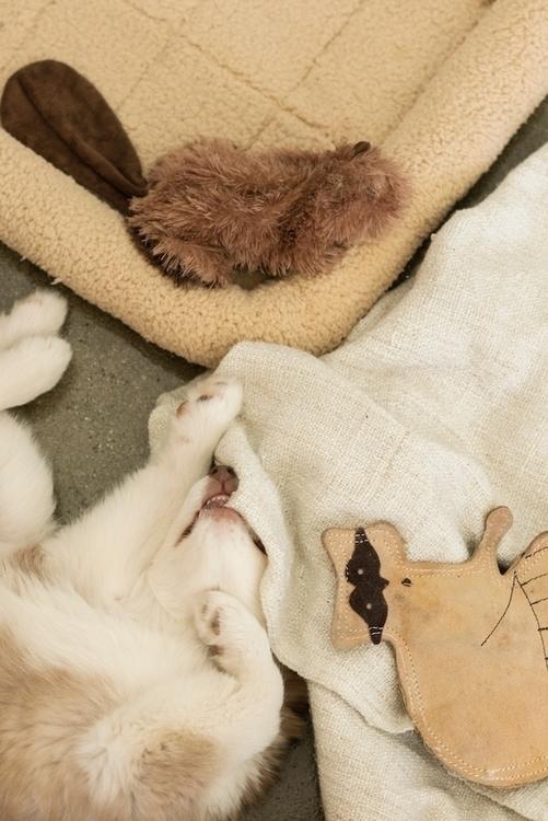 Nuki wild ~ - puppy, chillax, dog - tlvbirdie | ello
