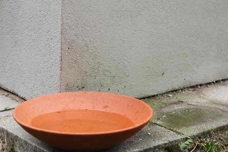 Drink - give, birds, rain - golan_pat0s | ello