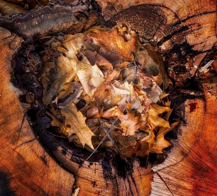 arboreal centerpiece  - textures - docdenny | ello