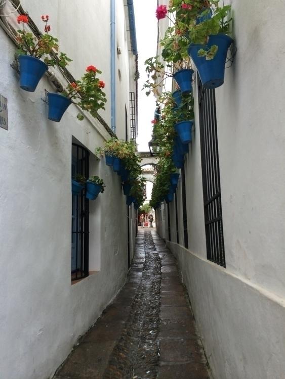 Spain, street, flower, travel - kuru_ | ello
