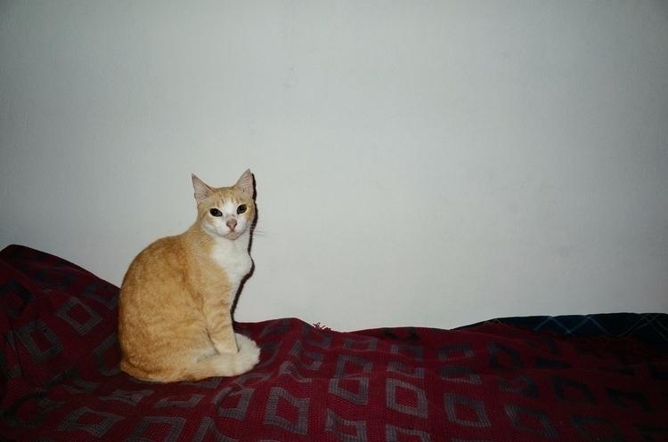 DE PERROS GATOS / DOGS CATS ( p - lucasbernal | ello