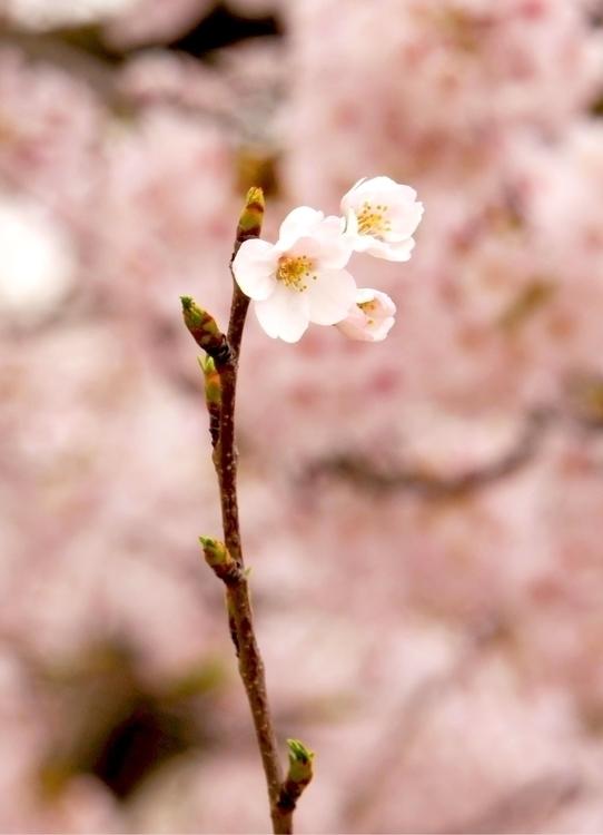 hokushin Post 10 Apr 2017 08:49:37 UTC   ello