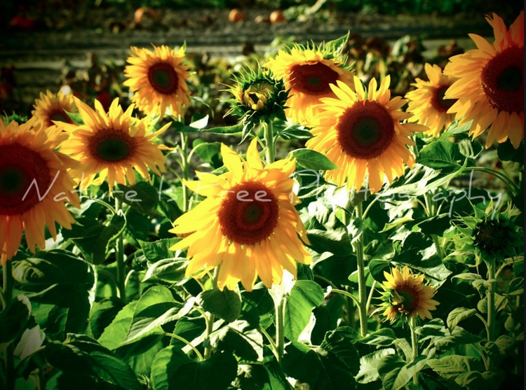 """Earth laughs flowers."" ~Ralph  - natureisfree | ello"