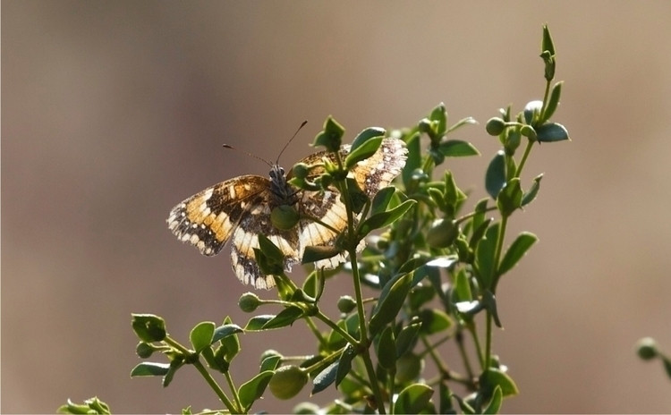 Lone butterfly desert  - insects - bamps | ello