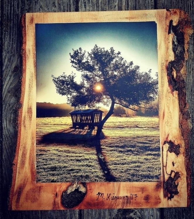 Photo Wood Sunrise Apple Tree s - natureisfree | ello