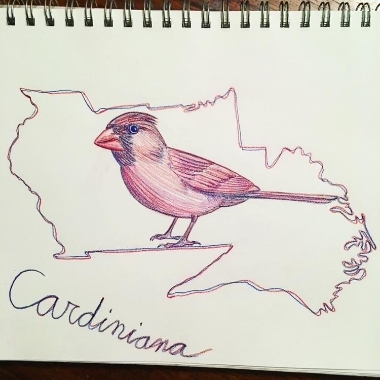 cardinal state bird contiguous  - mydiagonallife | ello