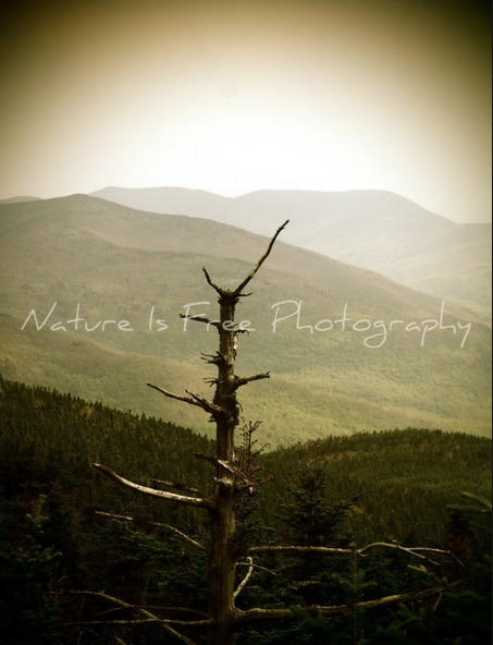 imperative maintain portions wi - natureisfree | ello